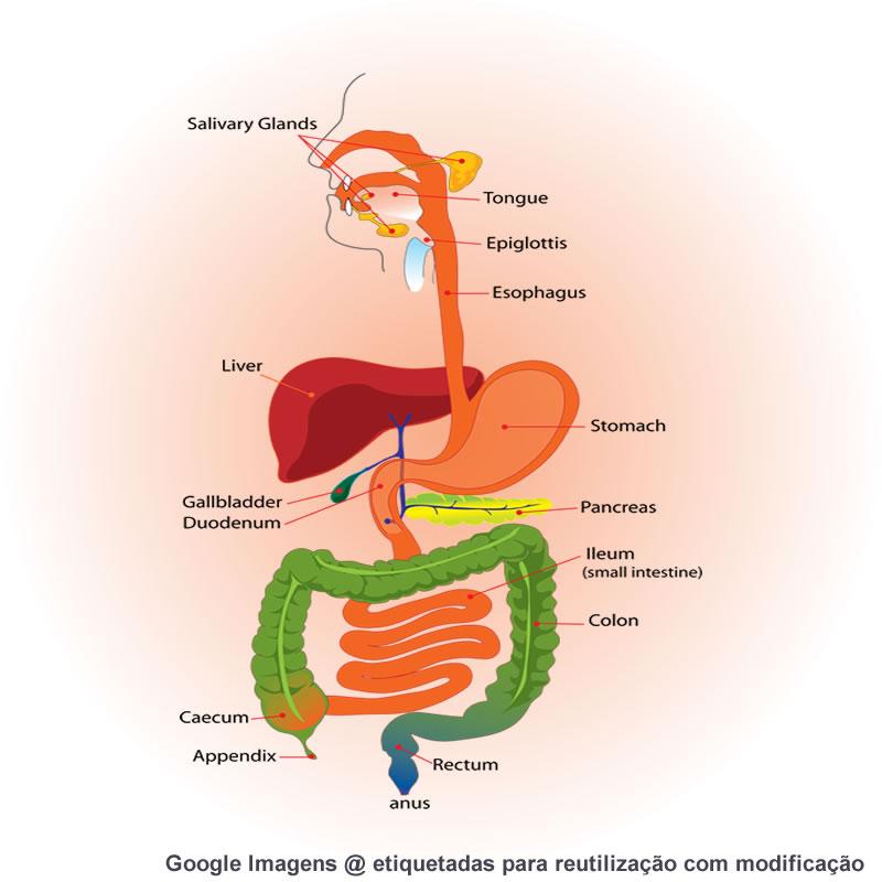 Gastrenterologista, Dr. Reis Duarte de grande perspicácia